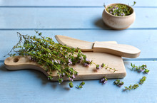 Thyme Vulgaris Isolated On Blue Background. Thymus Vulgaris Is A Species Of Flowering Plant .Thyme Is Any Of Several Species Of Culinary And Medicinal Herbs.
