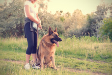 German Shepherd Dog With Owner In The Field