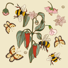 Botanical Illustration With Elements Of Pepper And Bumblebee And Butterfly