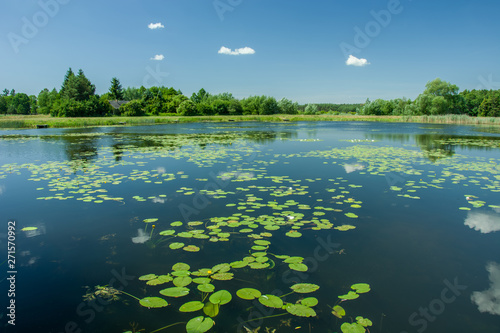 Tuinposter Waterlelies Floating lotus leaves on a lake, trees and blue sky