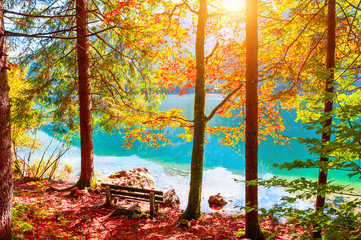 Fototapeta 3D Bench and yellow autumn trees on the shore of lake in Alps, Austria. Beautiful autumn landscape
