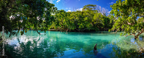 Photo sur Aluminium Arbre The Blue Lagoon, Port Vila, Efate, Vanuatu
