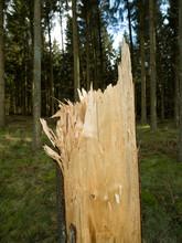 Forest Drente Netherlands. Cra...