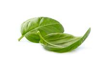 Basil Leaves In Closeup On Whi...
