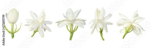 Foto auf AluDibond Wasserlilien White flower, Thai jasmine flower isolated on white background.