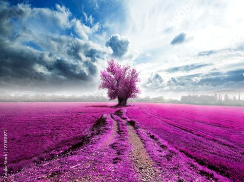 La pose en embrasure Lavande Lavender