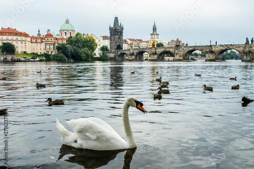 Fotografie, Obraz Cisnes y patos en Karluv Most