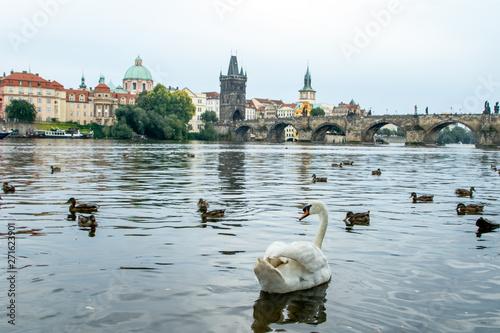 Fototapeta Cisnes en Karluv Most