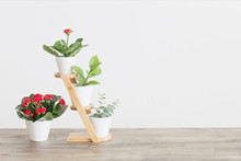 Houseplants Against  White Wall On Wooden Table