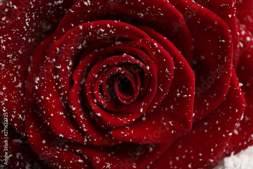Foto auf Gartenposter Roses Beautiful red rose with snow as background, closeup