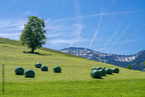 Hay Harvest In The Allgau Alps Near Oberstaufen With Plastic