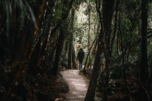 Back View Of Woman Walking Away In A Fairy Forest Path Between Trees