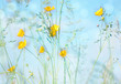 canvas print picture - Sommerwiese