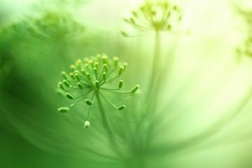 Beautiful green blurry artistic blossom details.