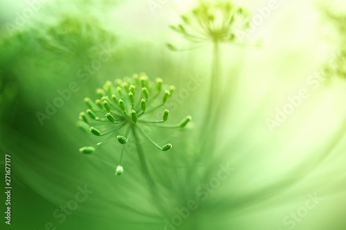 Beautiful green blurry artistic blossom details.