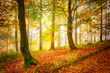 Beautiful colorful autumn season forest with trees.