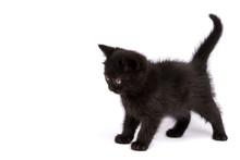 Beautiful Black Kitten On A Wh...