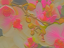 Cycle Of Beauty 11 Orchid Abstract