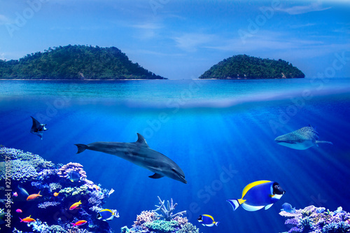 Montage in der Fensternische Delphin Background of Islands and underwater coral reef with Tropical marine fish, dolphin and whale shark
