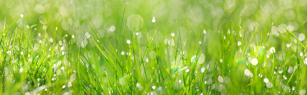 Fototapeta Green grass abstract background. beautiful juicy young grass in sunlight rays. green leaf macro. Bright fresh Summer or spring nature background. long banner.  copy space