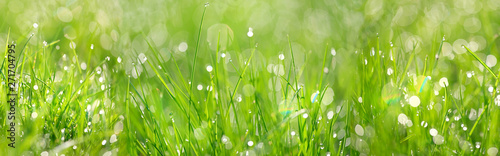 Poster Gras Green grass abstract background. beautiful juicy young grass in sunlight rays. green leaf macro. Bright fresh Summer or spring nature background. long banner. copy space