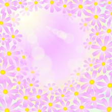 ピンク色のコスモスの...