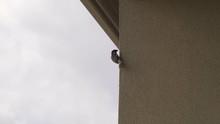 Bird Hanging On Hotel Wall