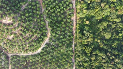 Aerial footage palm oil plantation beside rainforest in Southeast Asia  - 271710984
