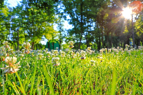 Fototapeta beautiful daytime summer forest landscape obraz na płótnie