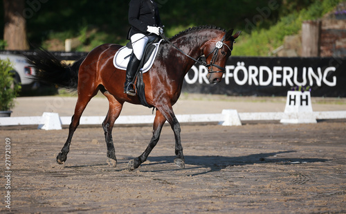 Foto op Canvas Paarden Dressage horse in close-up in a dressage competition in a square..