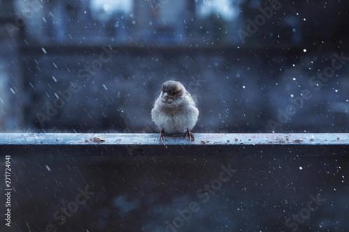 Spatz sitzt im Regen auf Geländer