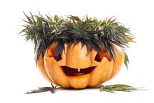 Halloween Pumpkin Jack Lamp And Hemp, Cannabis And Marijuana Leaves