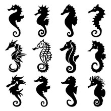 Seahorse Silhouette Collection