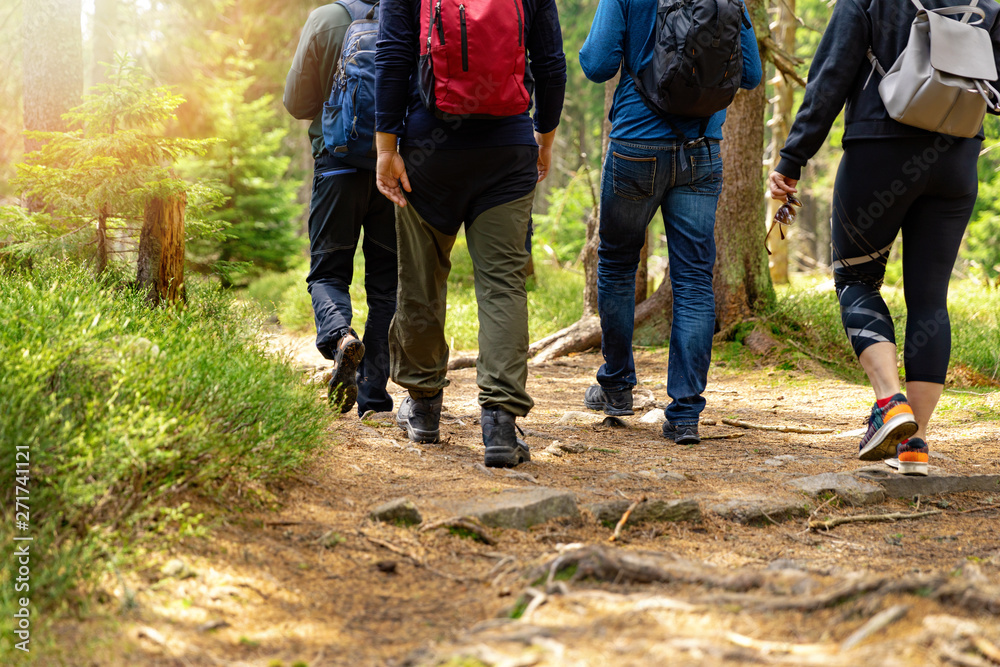 Fototapety, obrazy: nature adventures - group of friends walking in forest with backpacks