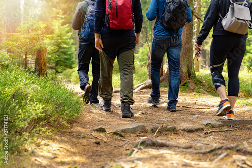Obraz nature adventures - group of friends walking in forest with backpacks - fototapety do salonu