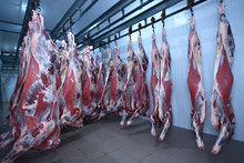 At The Slaughterhouse. Carcass...
