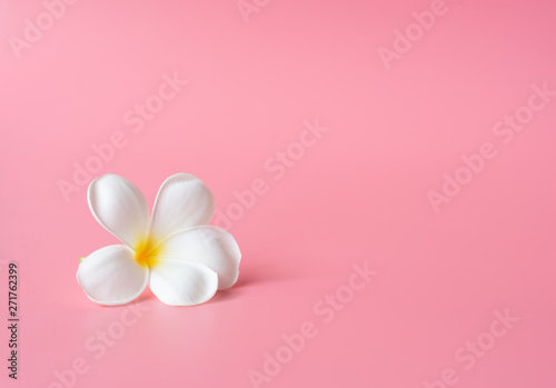 Foto auf AluDibond Plumeria Beautiful white Plumeria flower on pink background