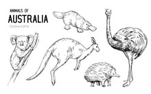 Australian Animals. Set Of Out...