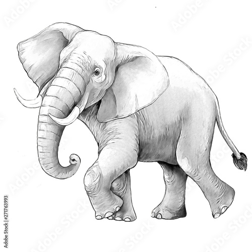 cartoon scene with big elephant on white background safari coloring page sketchbook illustration for children
