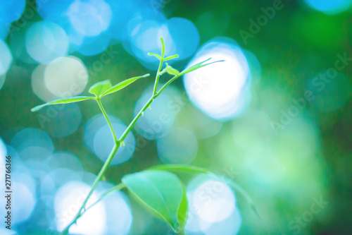 Poster Marron chocolat soft focus green leaves with bokeh light at sunrise ,spring nature wallpaper background