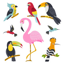 Vector Set Of Cute Birds From Jungle