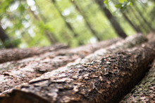 A Close Up Of Cut Down Logs In A Forest.