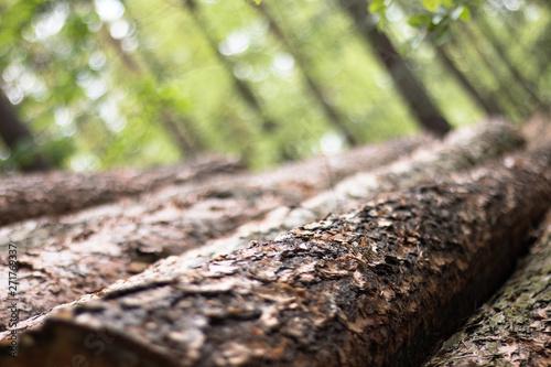 Carta da parati  A close up of cut down logs in a forest.