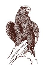 Vector Vintage Eagle, Graphical Illustration
