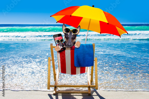 Photo sur Toile Chien de Crazy bull terrier dog on a hammok in summer