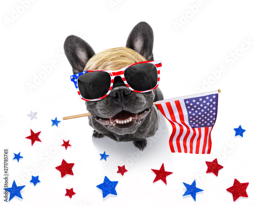 independence day 4th of july dog - 271785765
