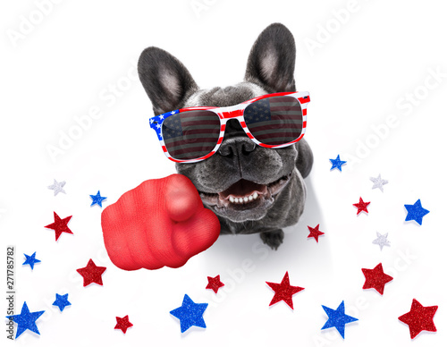 Photo sur Aluminium Chien de Crazy independence day 4th of july dog