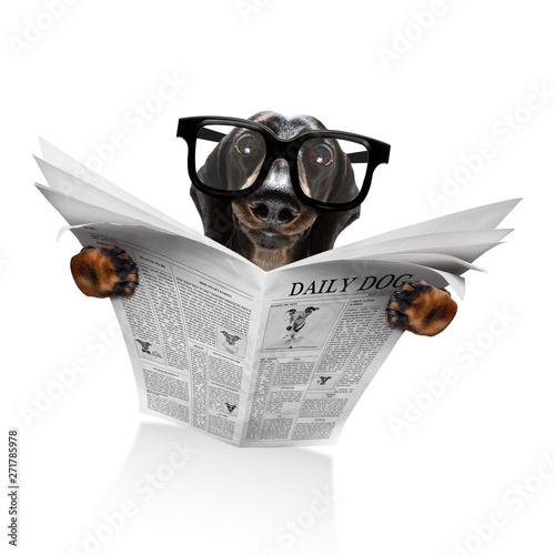 Photo sur Toile Chien de Crazy dog reading newspaper
