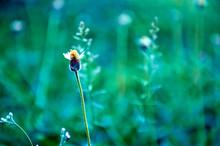 Small Wild Flowers, Long Flower Stalks