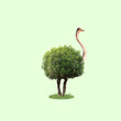 canvas print picture - Ostrich with the body as a tree with leaves on green background. Concept of interaction of different nature objects. Negative space. Modern design. Contemporary and creative art collage.